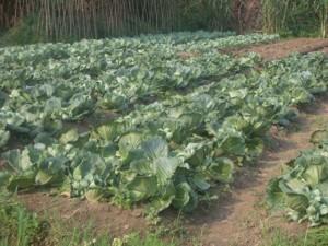 Erfolgreiche Landwirtschaft